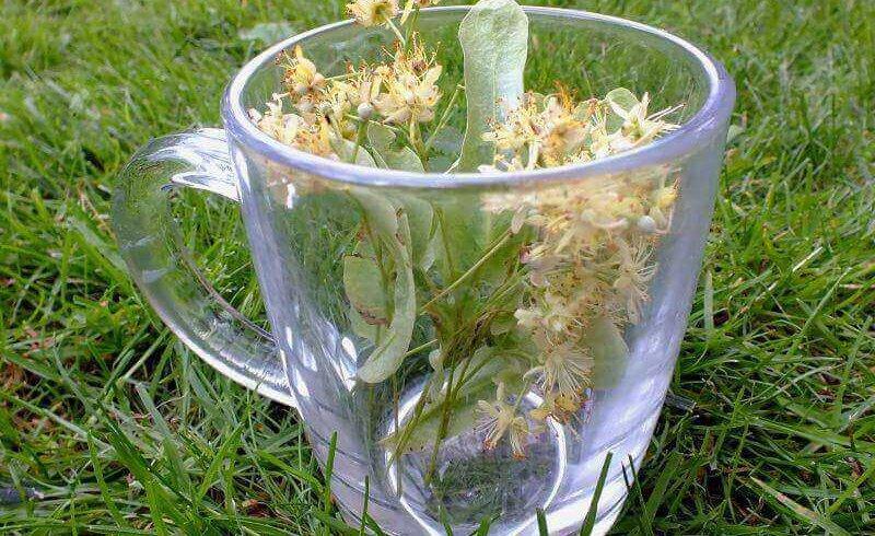 Té de flores Pruebaté