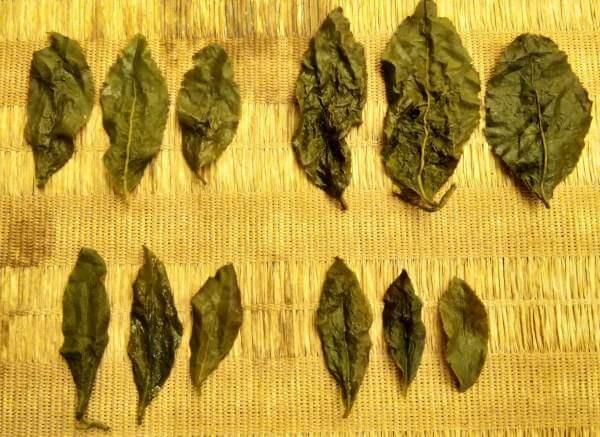 multiples-infusiones-hojas-enteras-diferentes-cultivar