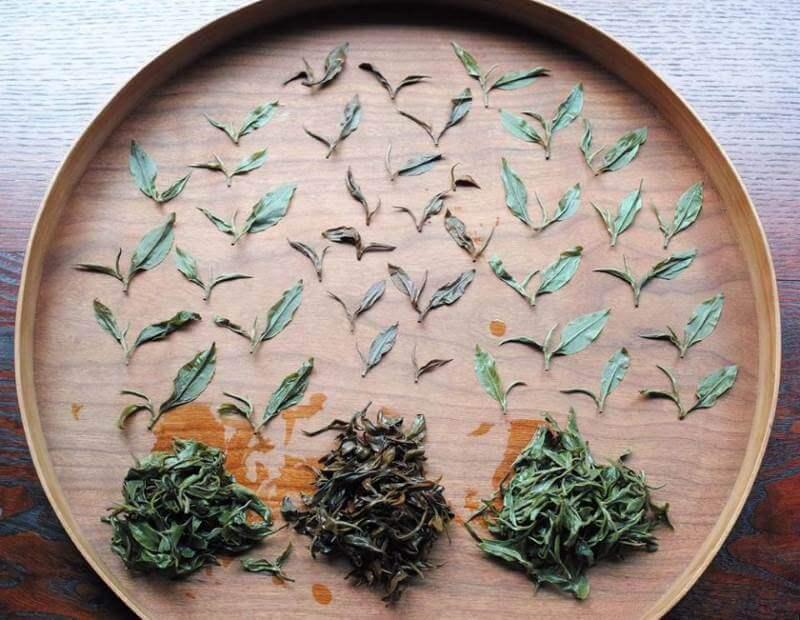 Cuántas infusiones puedes obtener del té de calidad